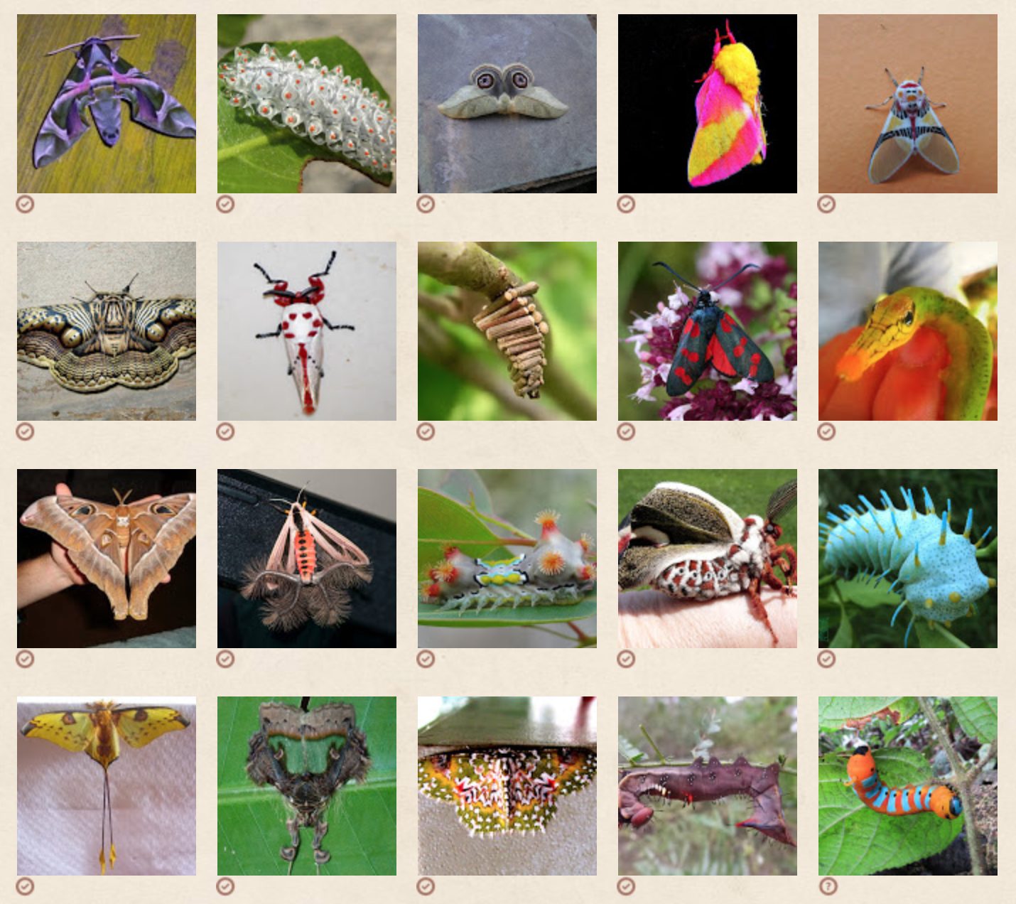 Citizen Science Platform for Wildlife | Project Noah